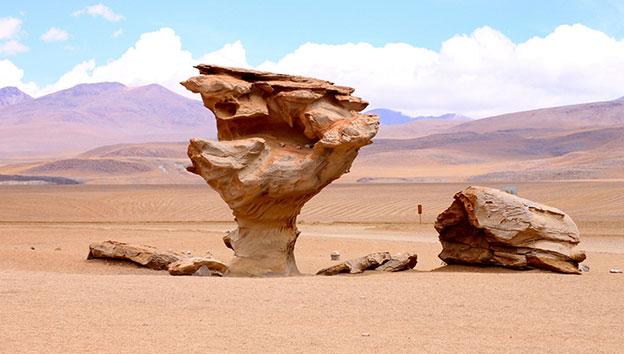 Боливия-каменное-дерево
