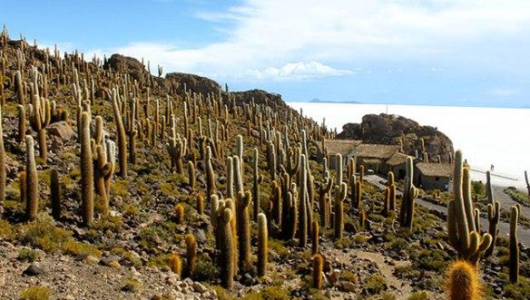 Боливия-остров-кактусов-2
