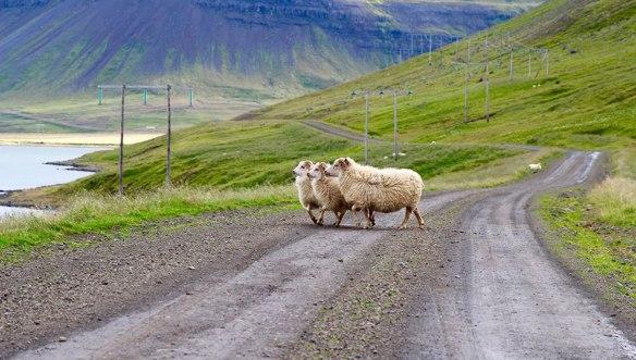 Исландия-три-барашки