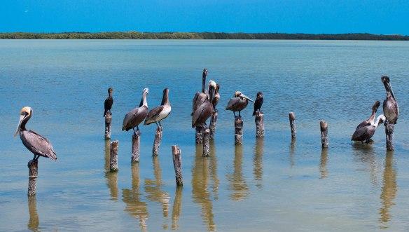 Мексика-пеликаны