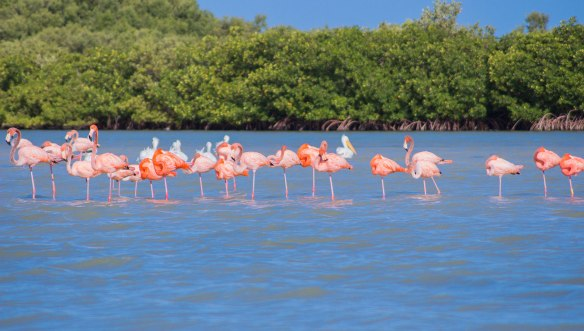 Мексика-фламинго