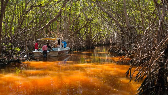 Мескиска-мангровые-заросли